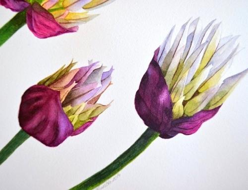 Garlic flowers step by step