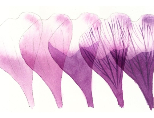 How to paint a crocus petal